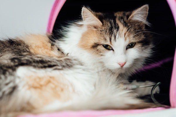 Kastration Katze, Kater