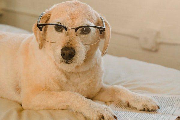 Bücher zum Thema Hundeerziehung